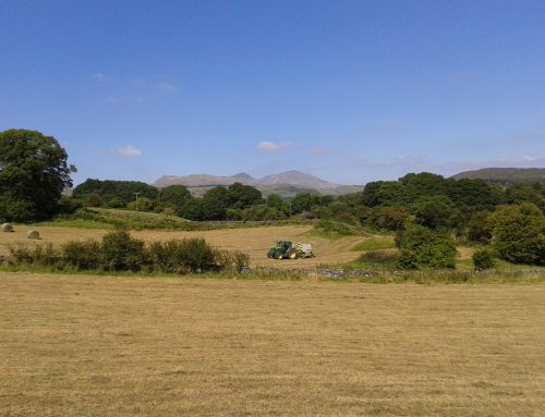 It's Haytime in the Lake District